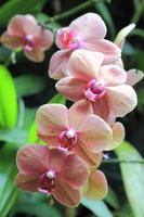 Blume Nahaufnahme 19