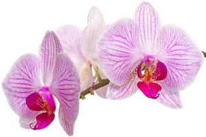 Orchideenblumen Nahaufnahme