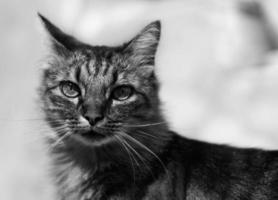 Chat à Poils sehnt sich foto