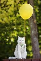 entzückende Katze, die einen Luftballon hält foto