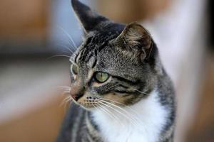 Katzen foto