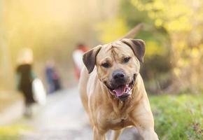 Hund zu Fuß foto