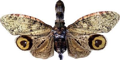 Schmetterling auf einem weißen Hintergrund