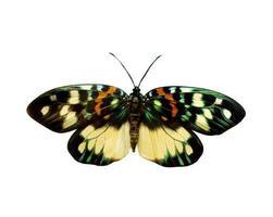 bunter Schmetterling lokalisiert auf Weiß