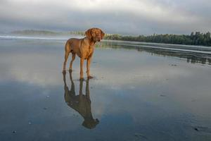 Hund steht am Strand foto