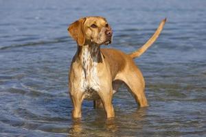 Hund am Strand foto