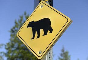 Bärenkreuzungszeichen auf der Straße foto