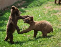 Zwei Babybabys spielen zusammen foto