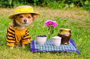 kleiner Hund, der gelben Anzug trägt, der in Wiese entspannt foto