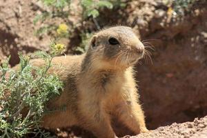 Tiere von New Mexico