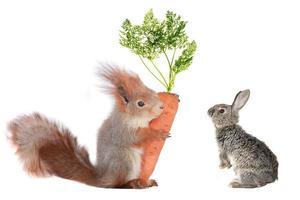 Kaninchen und Eichhörnchen