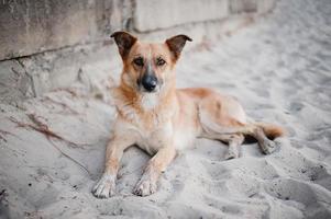 Hund im Sand liegen