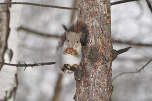 kleines Eichhörnchen foto