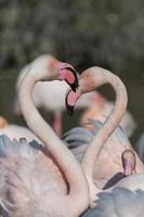 Gruppe Flamingos
