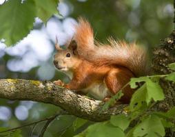 Eichhörnchen sitzt auf einem Baum.