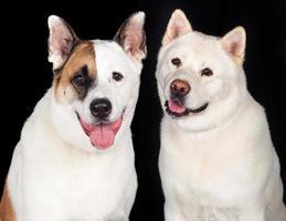 Hunde über schwarzem Hintergrund