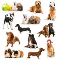 Haustiere isoliert foto