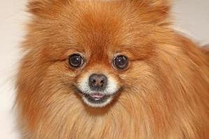 Haustier Hund foto