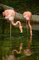 Vogel Flamingo