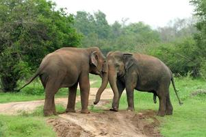 Elefanten foto