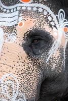 Indien, Kanchipuram, hinduistischer Elefant, Nahaufnahme des Auges