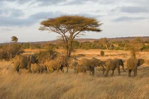 Elefanten bei Sonnenaufgang foto