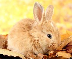 flauschiges foxy Kaninchen auf Blättern im Park