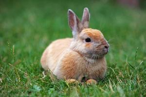 Kaninchen auf grüner Natur, im Freien