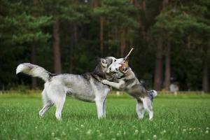 Welpe spielt mit Mama. foto
