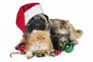 Weihnachtshund und Kätzchen. foto