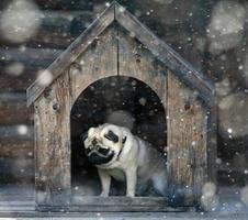 lustiger Mops Hund in der Hundehütte