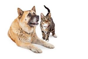 großer Hund und Katze schauen zusammen auf