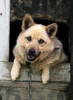 Bitzer Hund