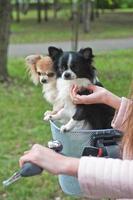 Fahrradwandern mit Hunden