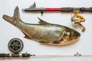 Fisch mit Ruten und Angelgerät foto