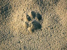 tierischer Fußabdruck foto