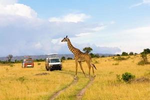 Giraffe überquert die Straße foto