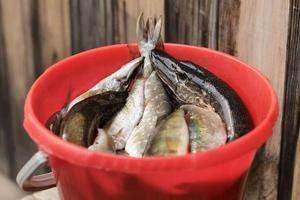 roter Eimer mit Fisch foto