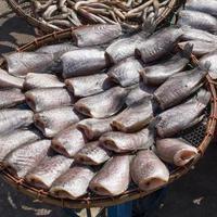 getrocknete Fische foto