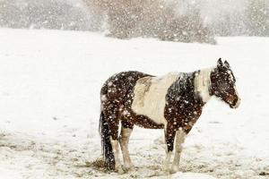 Pferde foto
