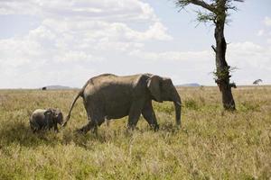 Elefant und Baby.