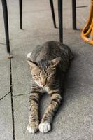 Katze liegt zur Ruhe.
