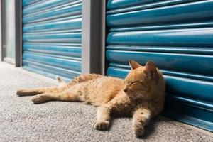Katze liegt zur Ruhe. foto