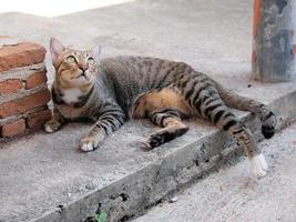 süße getigerte Katze legte sich auf den Boden