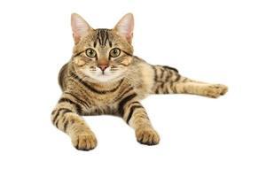 schöne Katze lokalisiert auf weißem Hintergrund foto