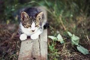 kleines getigertes Kätzchen, das auf dem Baum sitzt foto