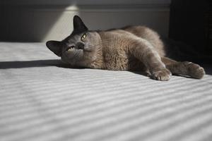 Katze, die im Sonnenschein auf dem Boden liegt foto