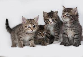 vier gestreifte und weiße Kätzchen sitzen auf grau