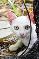 große gelbe Augen foto