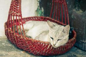 Mutterkatze mit Kätzchen foto